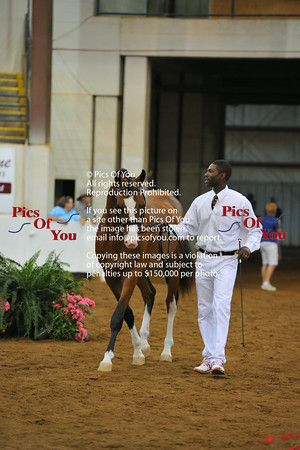 Dressage at Lexington BREED Show July 2014