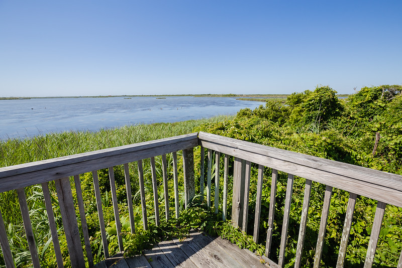 Pea Island National Wildlife Refuge - Things to do on Outer Banks