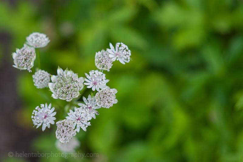Hob Green garden-43.jpg