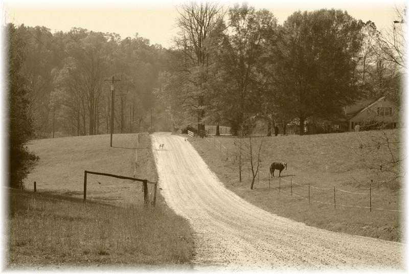 Timeless North Carolina
