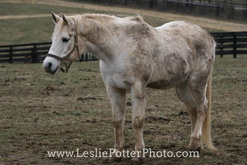 Kentucky Equine Humane Center, Nicholasville, KY. December 2008