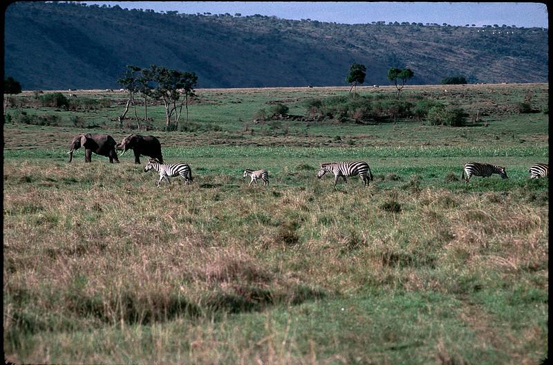 Kenya2_087.jpg