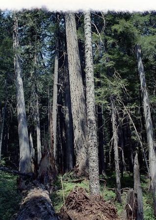 Nita, Cheakamus Lake & trail June 1969