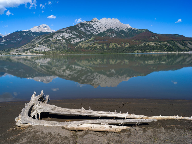 Driftwood at lakeside with mountain reflected in Jasper Lake, Yellowhead Highway, Jasper National Park, Jasper, Alberta, Canada