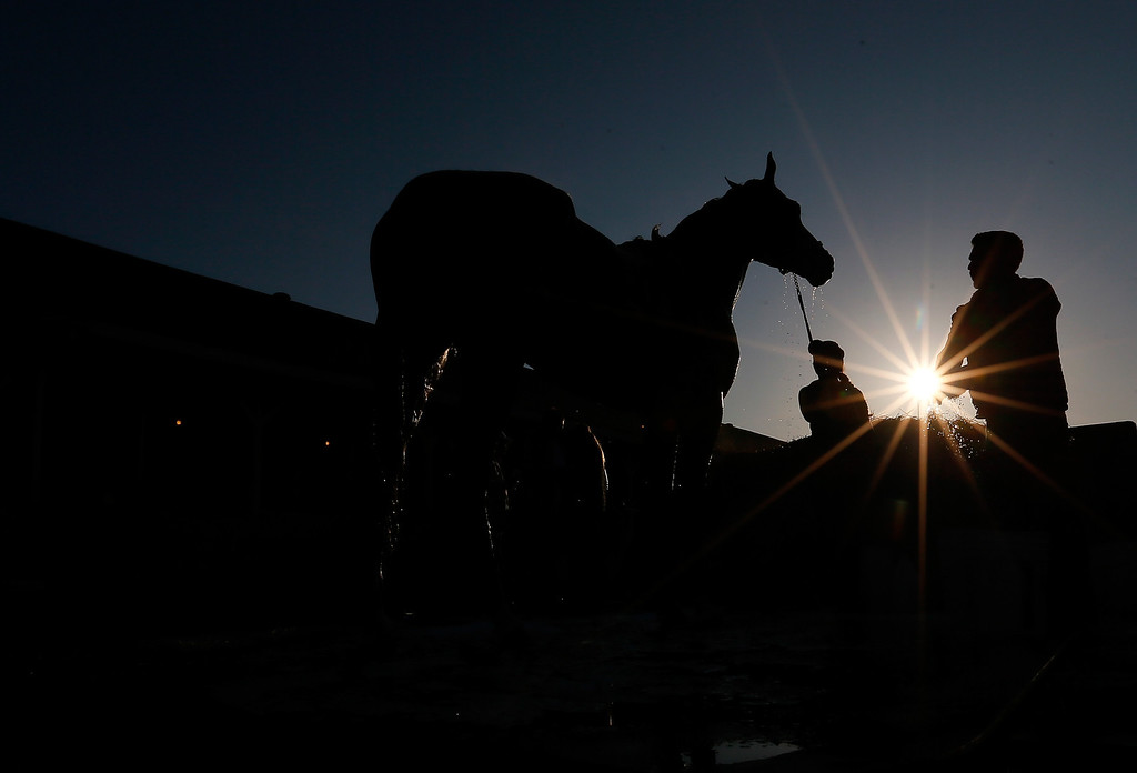. A horse is given a bath during early morning workouts at Churchill Downs on May 2, 2014 in Louisville, Kentucky.  (Photo by Kevin C. Cox/Getty Images)