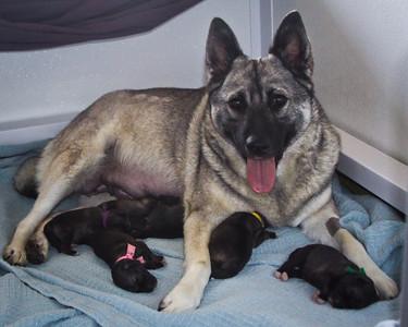2011-08-21 Angel Pups Day #2