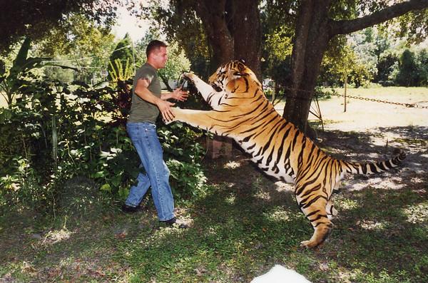 Tony & Tigers