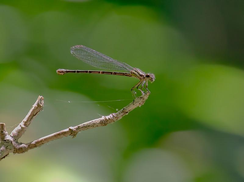 Female, White Clay Creek SP