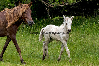 Gingersnap's Filly
