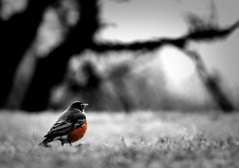 bird crop.jpg