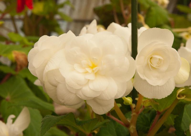 2009 09 06_White Flower Farm_0142_edited-1.jpg
