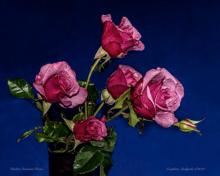 _DSC5284Barbra S Rose Side.jpg