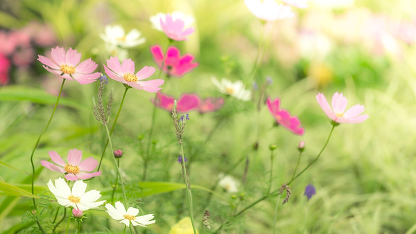 Floral Overdose