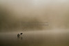 Cormorants in the Delaware River in Fog,  in Art of the State Competition, State Museum, Harrisburg, PA & award winner- New Hope Art League Juried Show