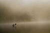 Cormorants in the Delaware River in Fog