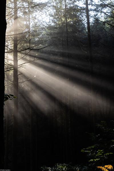 Sunshine Through Mist