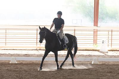 Horse 222