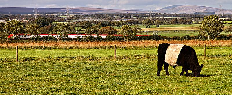 Virgin Train and the Beltie