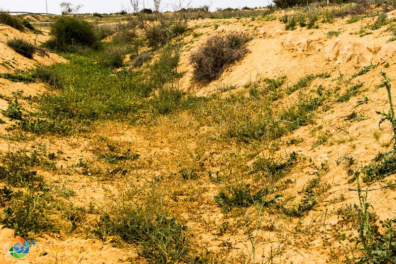 Desert-of-Zin-0661.jpg