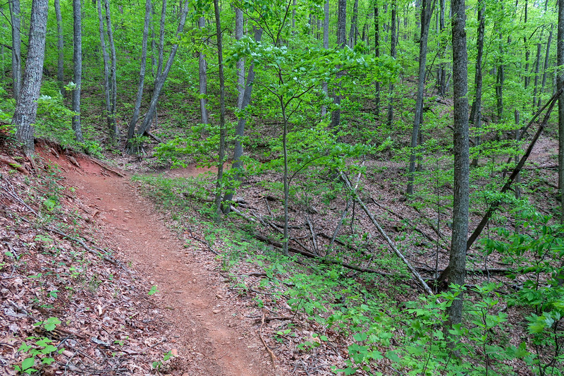 Green's Lick Trail -- 3,300'