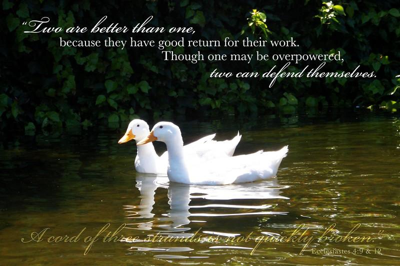 21_Ecclesiastes4-19_NJ_2010-6-26.jpg