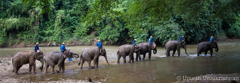 Thailand - Chiang Dao elephant training center 3397.jpg