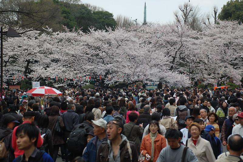 01-Japan10_1105.JPG