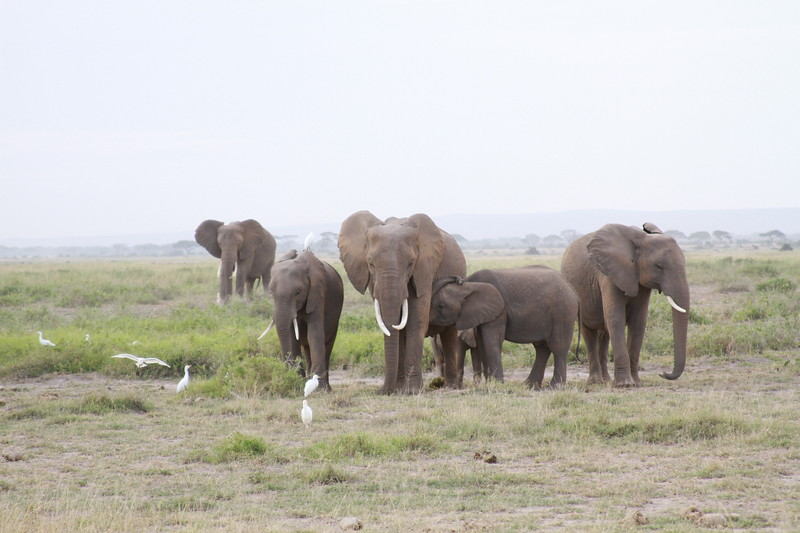 Kenya 2019 #2 440.JPG