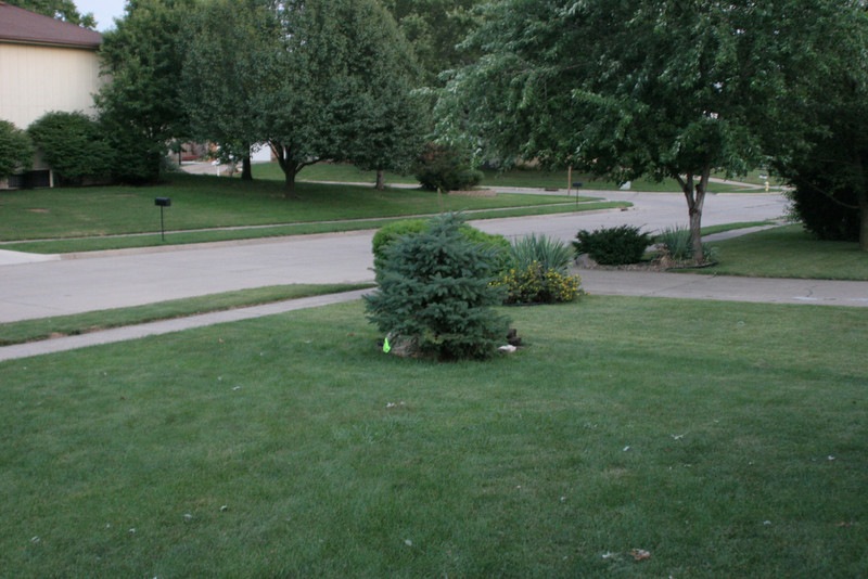 2005 July New Tree