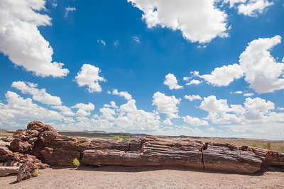 Petrified Forest National Park - August 15, 2014