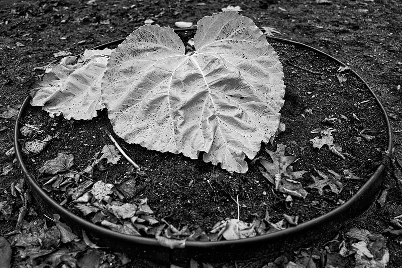 Circle of Leaf