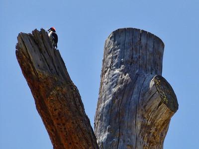 Pinnacles National Park 5-25-2013