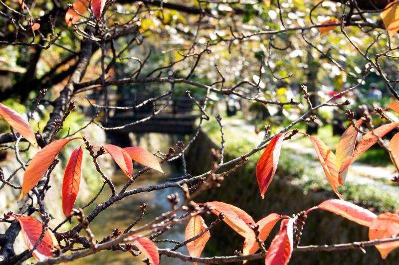 Japan_2010_NAT0398.jpg
