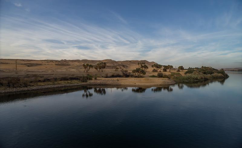 Papiros en la orilla del Nilo