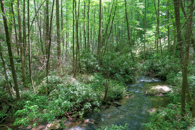 Spencer Branch Trail -- 2,570'