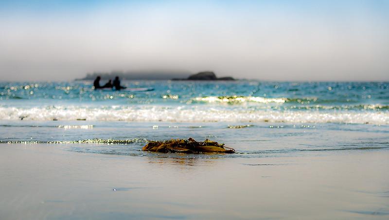 Mc Kenzie Beach Tofino