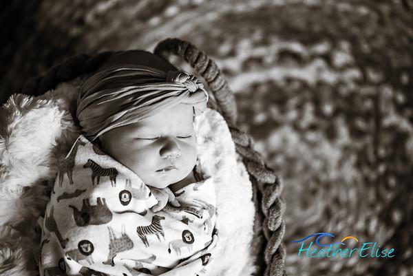Baby Hannah   San Diego Newborn Photographer