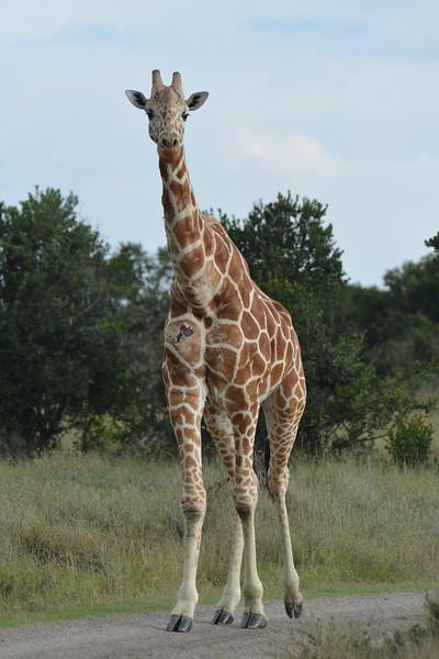 East Africa Safari 26.jpg