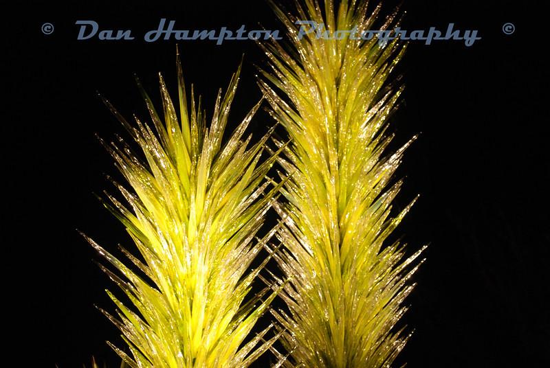 Desert Botanical_321.JPG