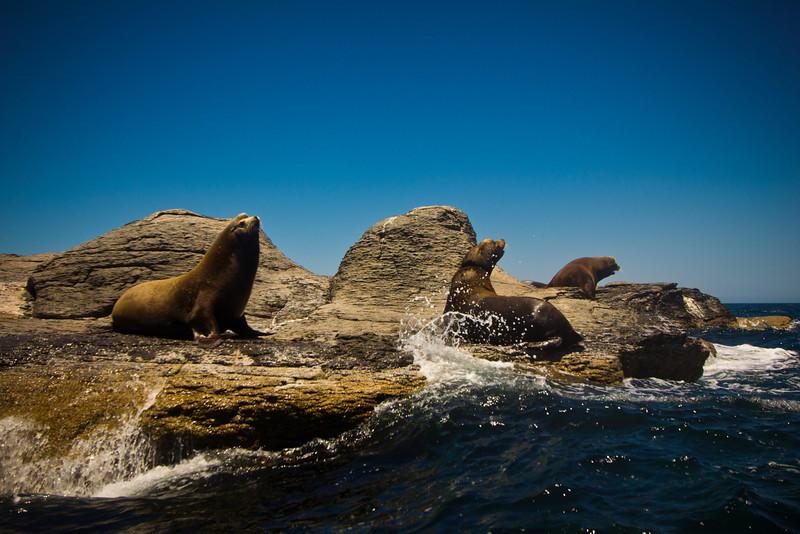 Loreto sea lions.jpg