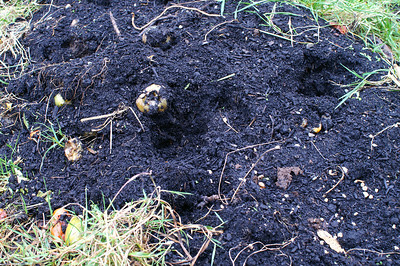 Evidence of bear activity in our garden