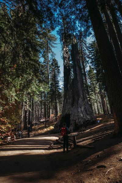 Forest_City_Photographs_Honeymoon_Califonia_San_francisco_Yosimite-201.jpg
