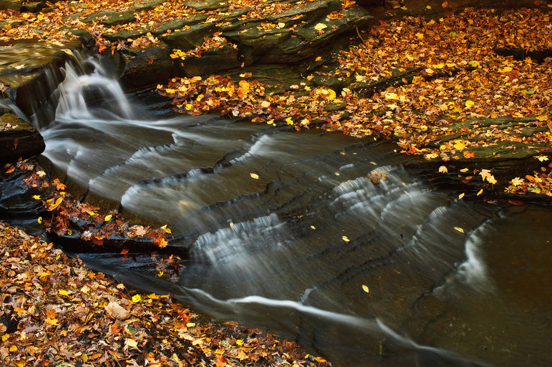 20081023_south_chagrin_reservation_005.jpg