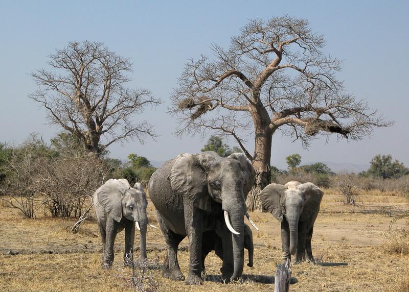 SOUTH LUANGWA PARK - ZAMBIA