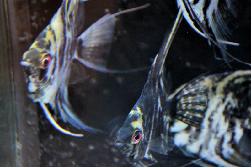 fish (9).jpg