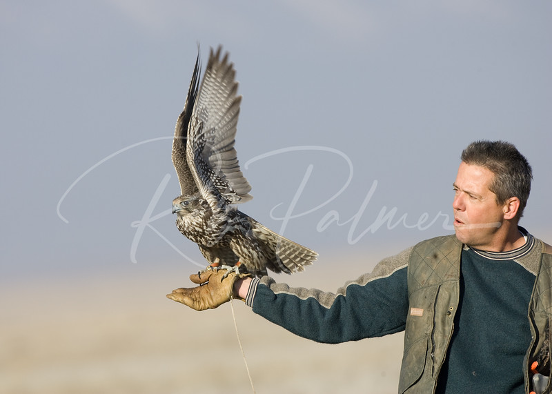 Gyrfalcon and Falconer