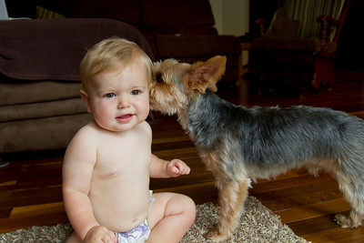 A dog and baby