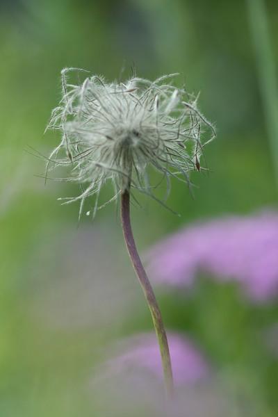 Flower_5792.jpg