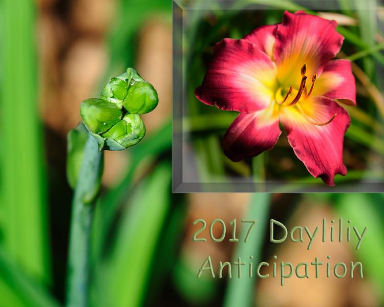 20170607 Flowers-9406 merged.jpg