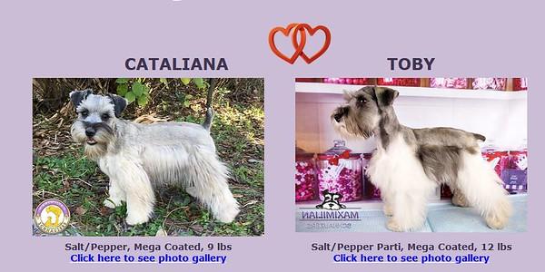 Catalina &Toby Puppies, DOB 1/12/2020